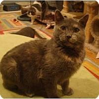Adopt A Pet :: Camille - Muncie, IN