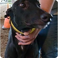 Adopt A Pet :: Vegas - Windsor Heights, WV