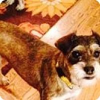 Adopt A Pet :: Willa - Russellville, KY