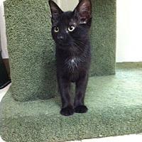 Adopt A Pet :: Pepe - Trevose, PA