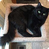 Adopt A Pet :: Colorado - Merrifield, VA