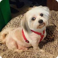Adopt A Pet :: Jigger meet me 3/31 - Manchester, CT