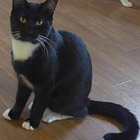Adopt A Pet :: Bandit - Manning, SC