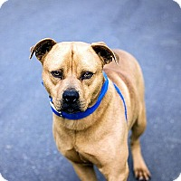 Adopt A Pet :: Rhett - Berkeley, CA