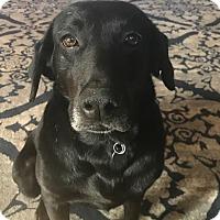 Adopt A Pet :: Clover - Huntsville, AL
