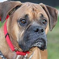 Adopt A Pet :: Macintyre ('Mac') - Phoenix, AZ