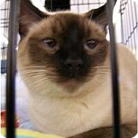 Adopt A Pet :: Suki - Riverside, RI
