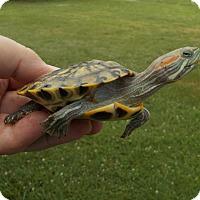 Adopt A Pet :: Eric Slider - Baltimore, MD