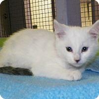 Adopt A Pet :: Leroy - Dover, OH