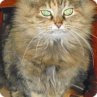 Adopt A Pet :: Kaia - Vansant, VA