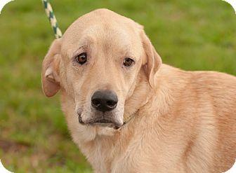 Shepherd (Unknown Type)/Hound (Unknown Type) Mix Dog for adoption in Gainesville, Florida - Jack