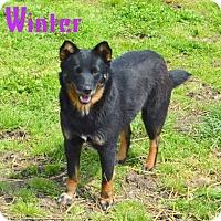 Adopt A Pet :: Winter - Jasper, IN