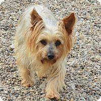 Adopt A Pet :: Tabitha - Prole, IA
