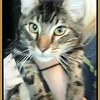 Adopt A Pet :: VELVET - Malvern, AR