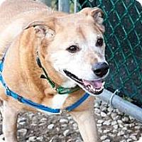 Adopt A Pet :: Sprite - Novelty, OH