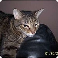 Adopt A Pet :: *Sally - Winder, GA