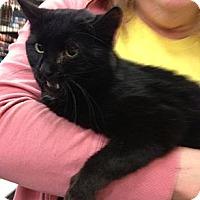 Adopt A Pet :: Savannah - Pittstown, NJ