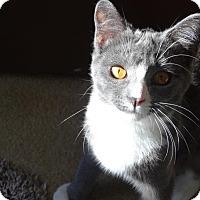 Adopt A Pet :: GRADY - Diamond Bar, CA