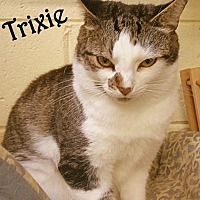 Domestic Shorthair Cat for adoption in Simpsonville, South Carolina - Trixie