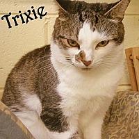 Adopt A Pet :: Trixie - Simpsonville, SC