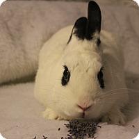Adopt A Pet :: Titus - Hillside, NJ