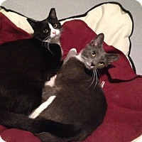 Adopt A Pet :: Bliss (and Avery) - Oyster Bay, NY