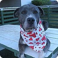 Adopt A Pet :: Ricky - Crescent City, CA