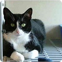 Adopt A Pet :: Stubby - Winter Haven, FL