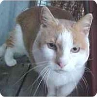 Adopt A Pet :: Rufus - Lunenburg, MA