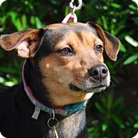 Adopt A Pet :: Lexi - Sugar Land, TX