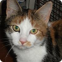 Adopt A Pet :: Wynonna - Colmar, PA