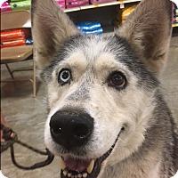 Adopt A Pet :: Luna - Bellingham, WA