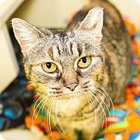 Adopt A Pet :: Chandler FEE WAIVED - Seville, OH