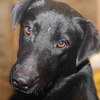 Adopt A Pet :: Brassy - Rossville, TN