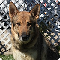 Adopt A Pet :: Skylar - Stockton, CA