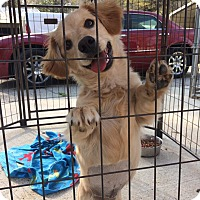 Adopt A Pet :: Maggie - Daleville, AL