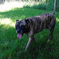 Adopt A Pet :: Roxy - Gerrardstown, WV