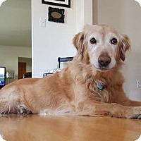 Adopt A Pet :: Bea - Minnetonka, MN