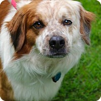 Adopt A Pet :: Redd - Chester Springs, PA