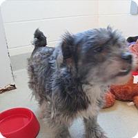 Adopt A Pet :: Hollins - Napa, CA