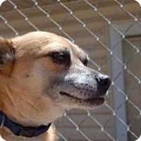 Adopt A Pet :: Tyke - SLC, UT
