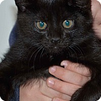 Adopt A Pet :: Anna - Troy, OH