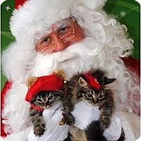 Adopt A Pet :: Foxie & Fozie - Palmdale, CA