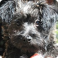 Adopt A Pet :: Jasper - Denver, CO