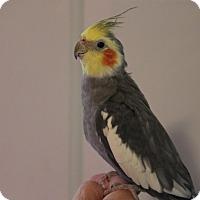 Adopt A Pet :: Hope - St. Louis, MO
