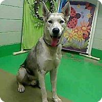 Adopt A Pet :: Zander - Golden, CO