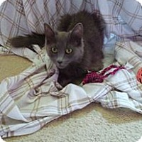 Adopt A Pet :: Aeon - Leamington, ON