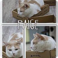 Adopt A Pet :: Paige - Orleans, VT