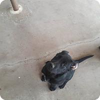 Adopt A Pet :: Ana - El Paso, TX