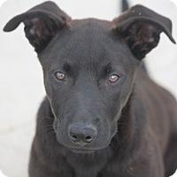 Adopt A Pet :: Mystery - Hooksett, NH